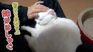 妹の膝の上でも寝てくれるようになりました! thumbnail