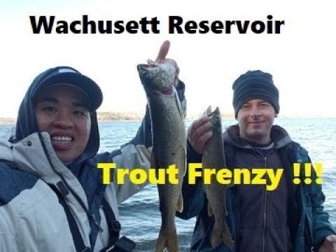 Wachusett Reservoir Lake Trout Frenzy