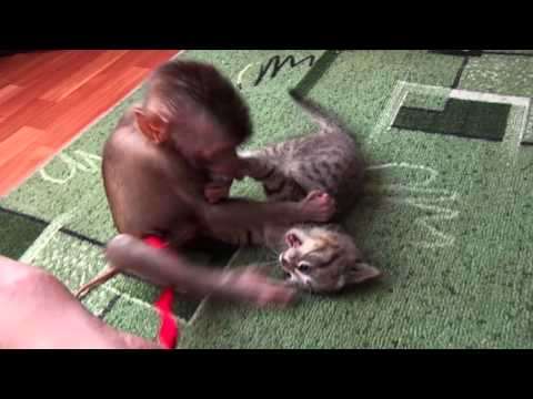 обезьяна и котенок