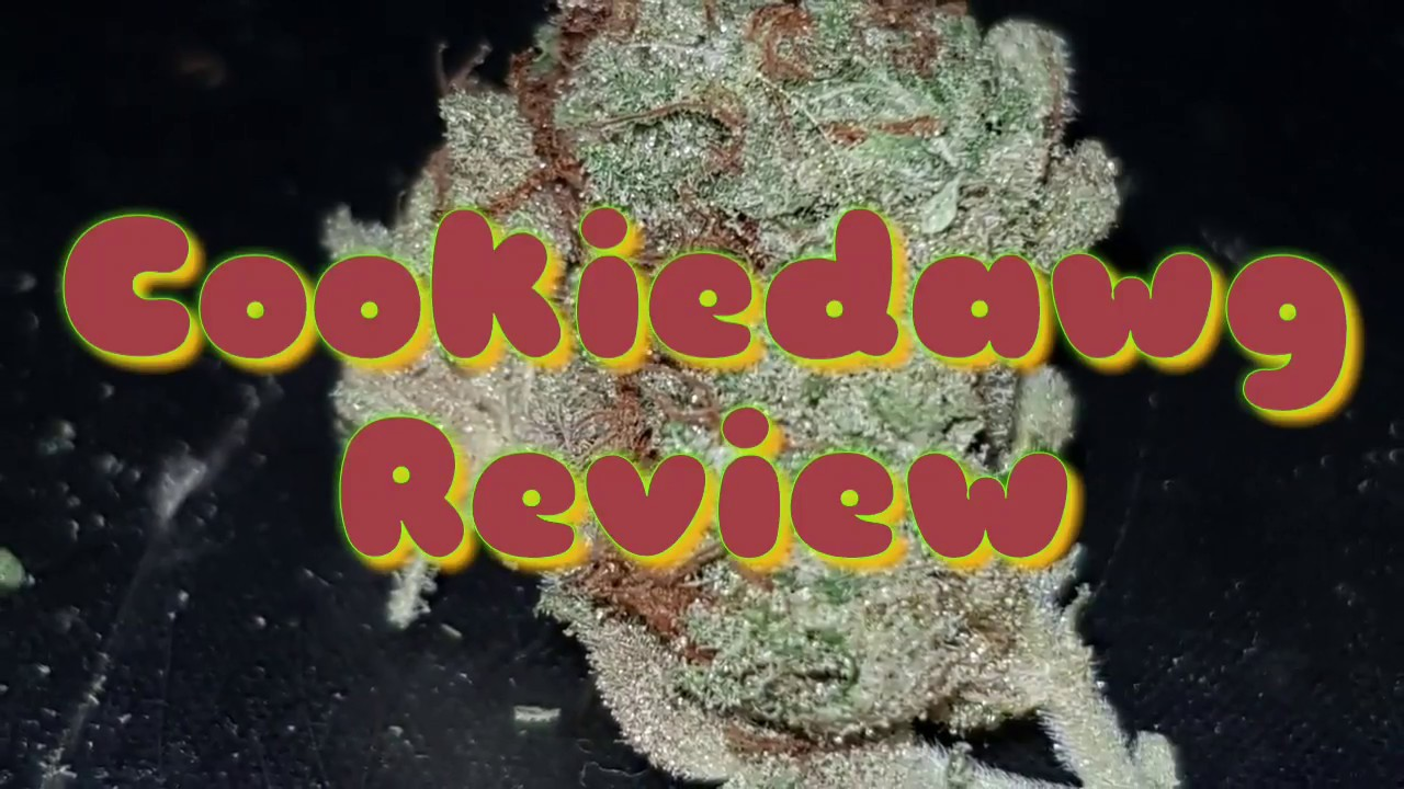 New cannabis strain Review UK(cookie dawg) plus my new bong rig