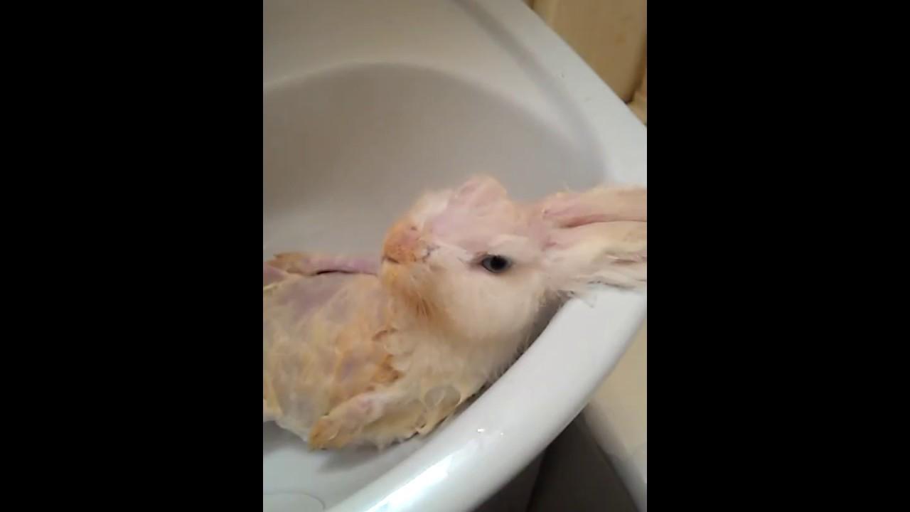 показывает как моется