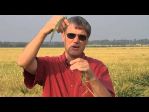 Wheat Management -