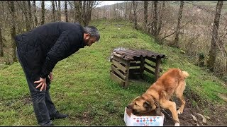 HER KÖPEK ŞANSLI DOĞMUYOR #hayvan besleme #kangal #dogoargentino #canecorso #jackrussell