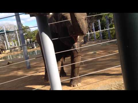Houston Zoo Elephant blows snot into bag of chips