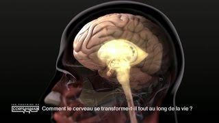 La transformation du cerveau au fil de la vie