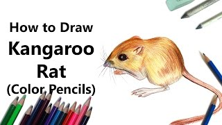 How to Draw a Kangaroo Rat with Color Pencils [Time Lapse]