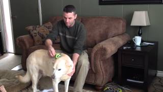 How To Groom a Short Haired Dog video by GranPaws