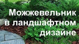 глава диплома обустройство земельного участка Блокнотик  Казачий можжевельник в ландшафтном дизайне