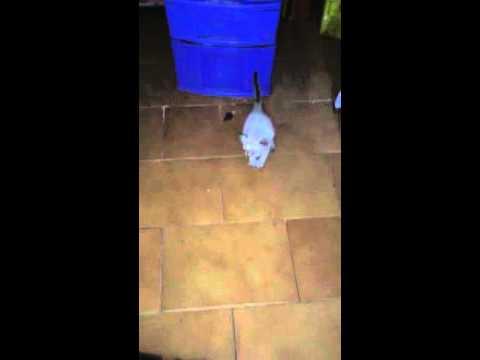 Cats playing - Gatinhos brincando