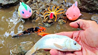 Real Koi Fish, Goldfish, Ornamental Fish, Lobster and Marine Animal Toys, Octopus, Sharks, Part156