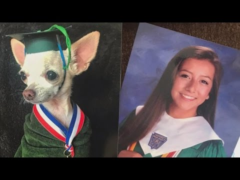 Thumbnail: Daughter Swaps Out Family Pics for Photos of Chihuahua in Matching Costumes