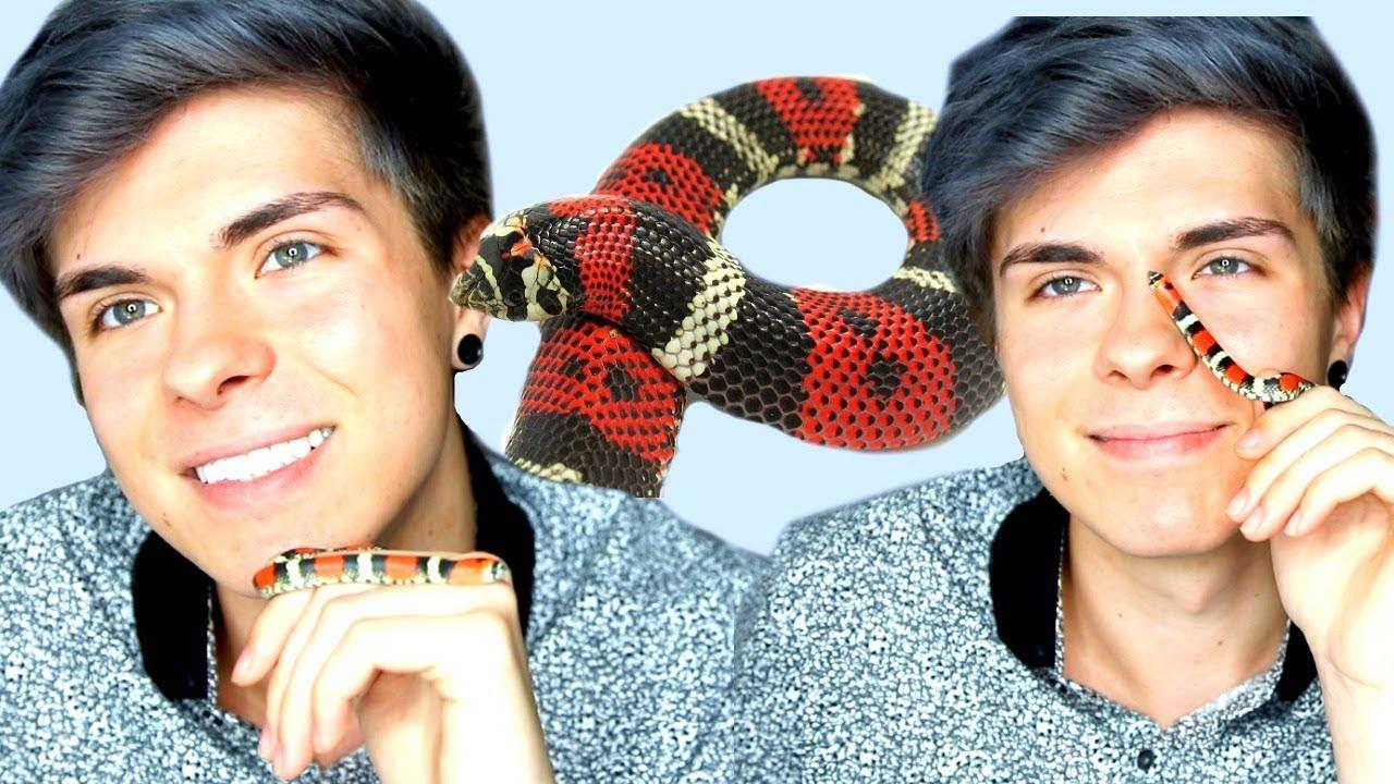 i-got-a-new-snake-tricolor-hognose