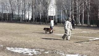 БОЛЬШОЙ РУССКИЙ РИНГ. КЕМЕРОВО 2017 БЕЗ ОБРАБОТКИ 1