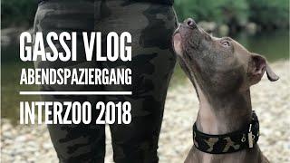 Abendspaziergang mit Hunde / Interzoo Nürnberg 2018 / Gassi Vlog