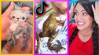 Los Animales más Increíbles de Tik Tok 😱 Mascotas Raras y Lindas 🔥 Reaccionando Sandra Cires Play