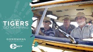 In The Spotlight - Cymot Tigers Go Camping