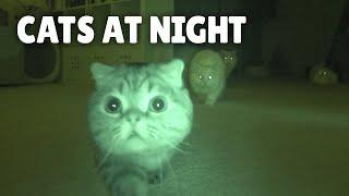 Cats vs Night