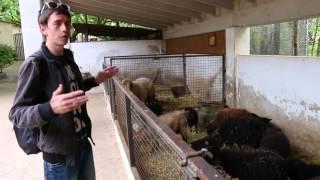 Mallorca. Park Natura zoo