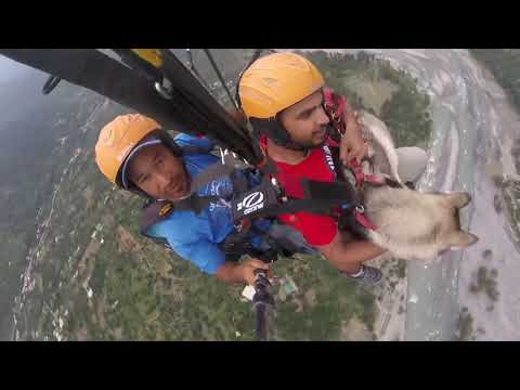 Watch: Siberian Husky Calmly Paraglides with Owner at 3,500 Feet in Himachal Pradesh