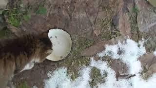 кот Саймон и другие - зимний вернисаж