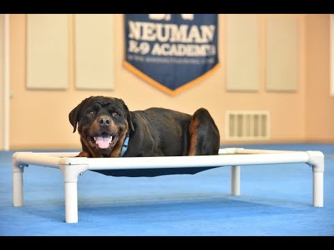 Sampson (Rottweiler) Boot Camp Dog Training Video Demonstration
