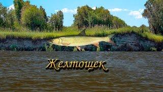 Русская Рыбалка 3.9 Желтощек.
