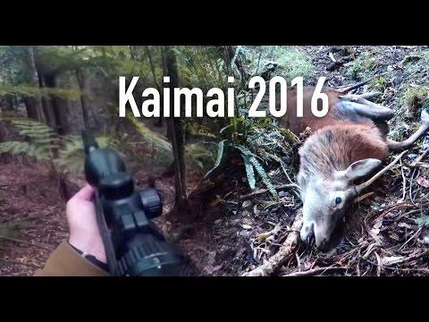 HUNTING - Kaimai Mid Winter 2016 - New Zealand