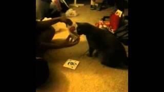 Teaching My Cat to Communicate