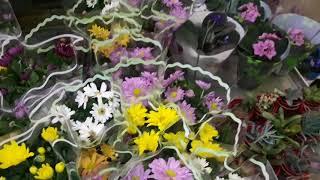 Орхидеи в Леруа Мерлен.Краткий обзор комнатных цветов.