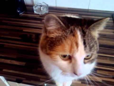Katze Miaut Youtube