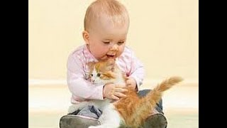 funny cats,funny cat videos ,funny animals,funny video,cats funny,funny videos,funny cat