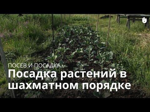 Посадка растений в шахматном порядке