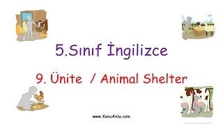 5. Sınıf İngilizce / 9. Ünite Animal Shelter / Konu Anlatımı