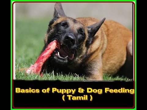 Feeding of Puppies And Dogs |Puppy Series 7|