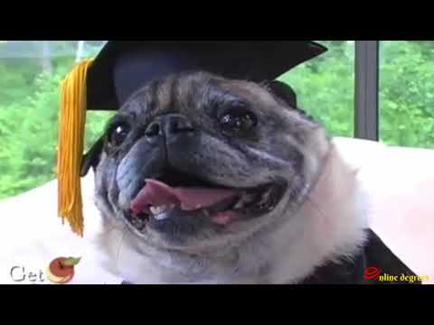 Online Degrees: How A Dog Earned A Life Experience Online MBA Degree