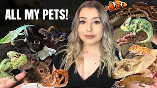 MEET MY PETS! (My 35+ Pets In One Video!) | UPDATED IN DESCRIPTION!!