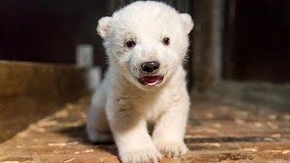"""حديقة حيوان في برلين تنعي الدب القطبي الصغير """"فريتز"""""""