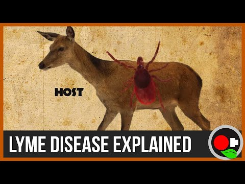 The Biology and Ecology of Lyme Disease - Untamed Science