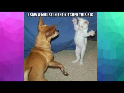 CUTE AND FUNNY EPIC ANIMAL VIDEO COMPILATION [COMPILATION#5] Cute funny cats dogs – Try Not To Laugh