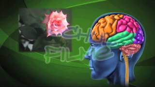 Film DVD / Biologie: AUGE / Sinnesorgane des Menschen