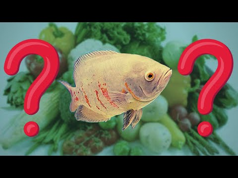 What VEGETABLES And FRUITS To Feed Oscar Fish