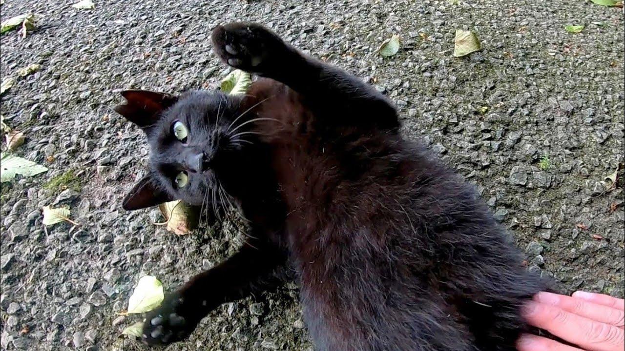 ナデナデすると喜んでゴロンゴロン転がる黒猫
