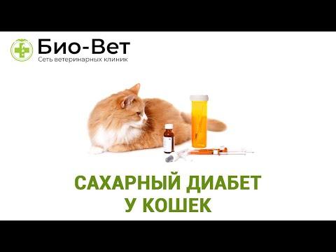 Симптомы болезней у кошек -