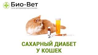 Сахарный диабет у кошек. Ветеринарная клиника Био-Вет.