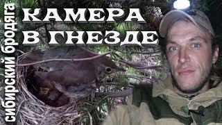 Gopro В ГНЕЗДЕ ПЕВЧЕГО ДРОЗДА НАБЛЮДЕНИЕ ЗА ЖИЗНЬЮ ПТИЦ поход в лес