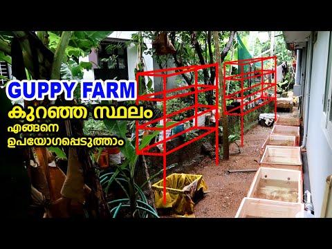 Guppy Farm കുറഞ്ഞ സ്ഥലം മാക്സിമം ഉപയോഗപ്പെടുത്താനുള്ള ശ്രമം My Farming EP#141
