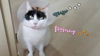 불편한 고양이  턱드름이 뭐꼬