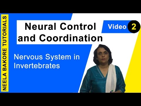 Neural Control And Coordination - Nervous System In Invertebrates
