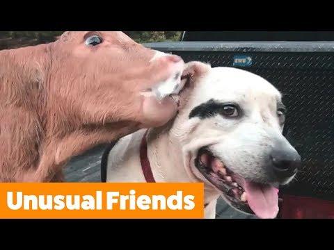 Adorable Pet Friends | Funny Pet Videos