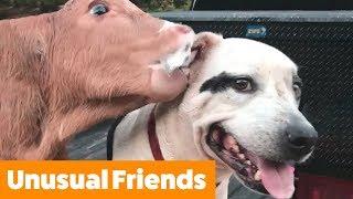 adorable-pet-friends-funny-pet-videos